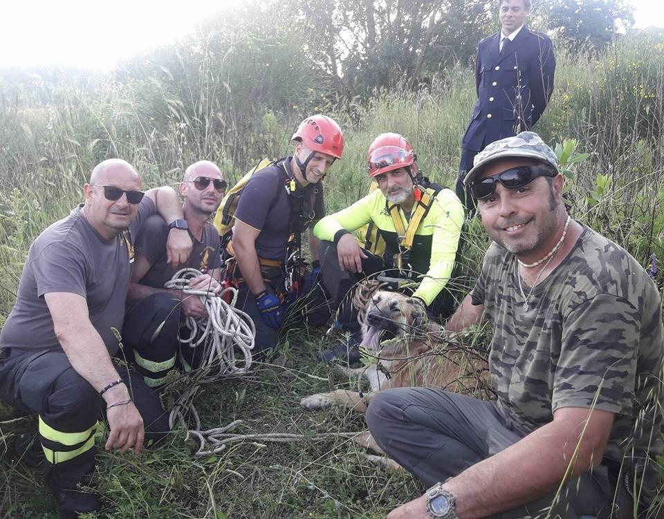 recupero e salvataggio animali scappati