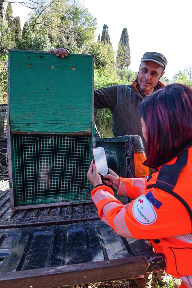 Cattura animali selvatici feriti