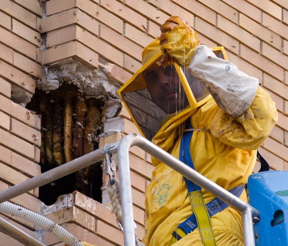 Rimozione nido di api no kill