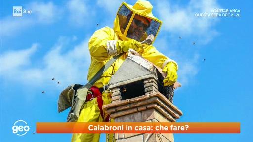 Rimozione nido di api vespe calabroni no kil